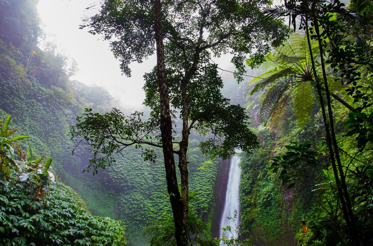 L'Oréal beskytter regnskogen